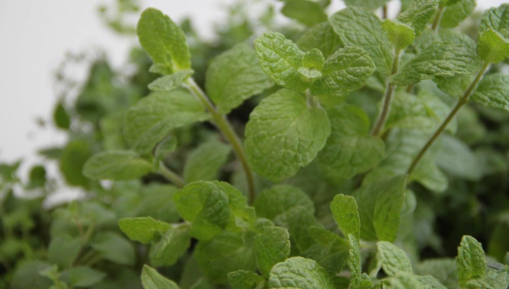 Naturmine® – für biologisch wirtschaftende Betriebe