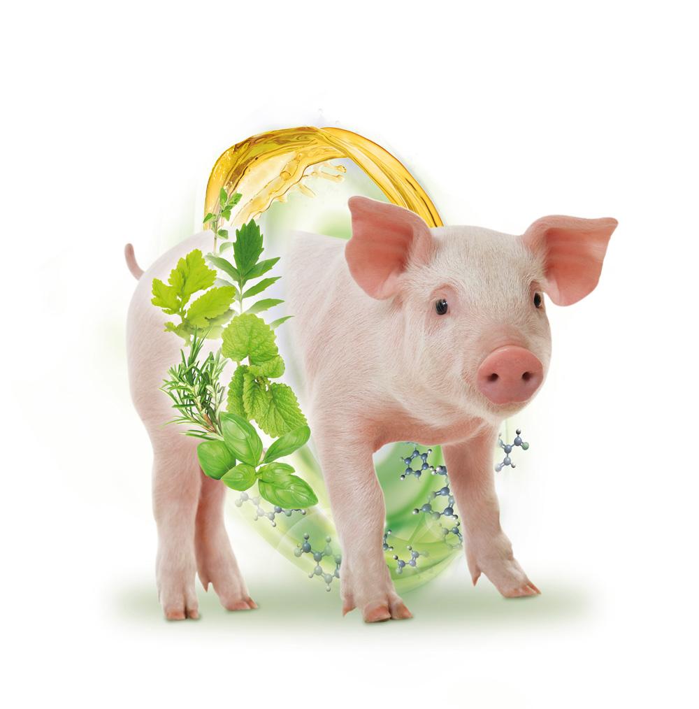 Gesunde Tiere = bessere Leistung = mehr Wirtschaftlichkeit + weniger Emissionen